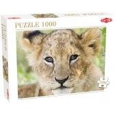 Lion puzzle - 1000 pcs